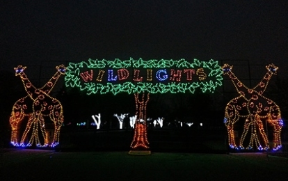 wild-lights-entrance-c6fd7588